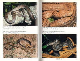 Captive husbandry and propagation of the boa constrictors and related boas.