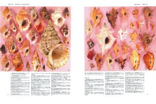 A collector's guide to seashells of the world.