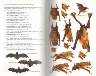 A field guide to the mammals of central America and southeast Mexico.