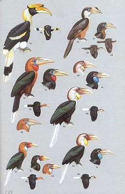 Birds of the Indian subcontinent.