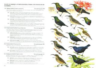 Sunbirds: a guide to the sunbirds, flowerpeckers, spiderhunters and sugarbirds of the world.