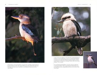Birdwatching in Australia and New Zealand.