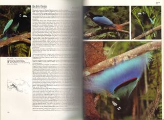 The Birds of Papua New Guinea: including the Bismarck Archipelago and Bougainville.