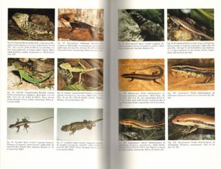Amphibians and reptiles of northern Guatemala, The Yucatan and Belize.