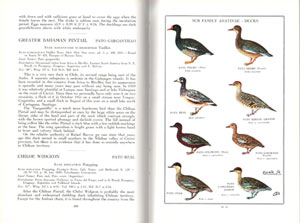 The birds of Chile and adjacent regions of Argentina, Bolivia and Peru.