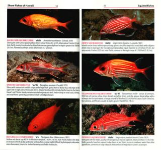 Shore fishes of Hawai'i.