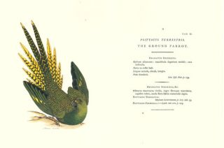 Zoology of New Holland [facsimile].