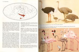 Handbook of the birds of Europe, the Middle East and North Africa. The birds of the Western Palearctic [BWP], volume one: Ostrich to ducks.
