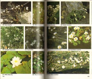 Collins photoguide to wild flowers of Britain and northern Europe.