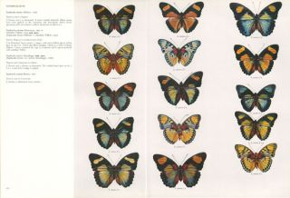Butterflies of the Afrotropical Region. Based on synonymic catalogue of the Butterflies of the Ethiopian Region by R. H. Carcasson.