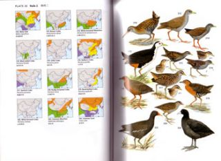 A field guide to the birds of China.