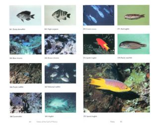 Fishes of the Gulf of Mexico: Texas, Louisiana, and adjacent waters.