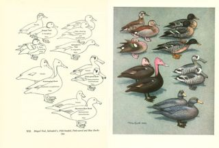 The waterfowl of the world.