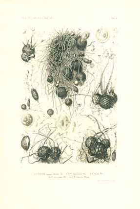 Selecta Fungorum Carpologia of the brothers L. R. and C. Tulasne. Translated into English by W. B. Grove.