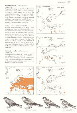 An atlas of the birds of the Western Palaearctic.