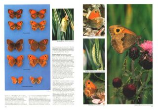 Butterflies and moths in Britain and Europe.