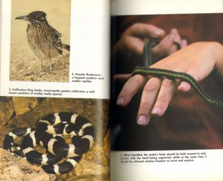 Garter snakes: their natural history and care in captivity.