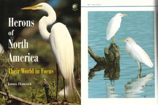 Herons of North America: their world in focus. James Hancock
