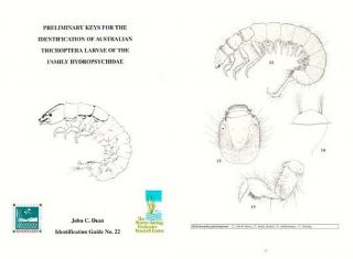 Preliminary keys for the identification of Australian Trichoptera larvae of the family Hydropsychidae.