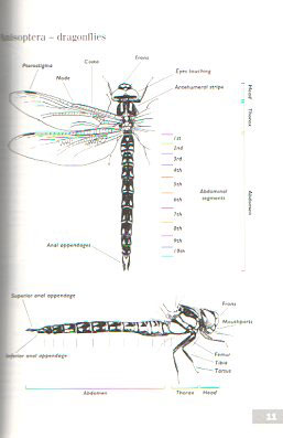 A guide to the dragonflies of Great Britain.