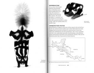 A guide to the carnivores of central America: natural history, ecology and conservation.