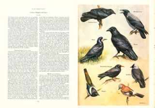 The history of the birds of Britain.