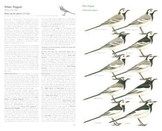 Pipits and wagtails of Europe, Asia and North America.