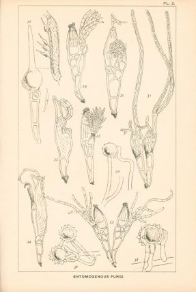 Vegetable wasps and plant worms. A popular history of entomogenous fungi, or fungi parasitic upon insects.