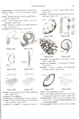 Plant identification terminology: an illustrated glossary.