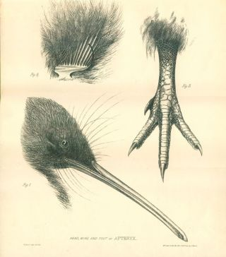 Essay on the ornithology of New Zealand [drop title].