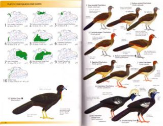 Birds of northern South America: an identification guide (volume two): plates and maps.