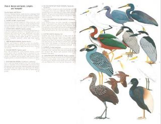 The birds of Ecuador, volume two: a field guide.