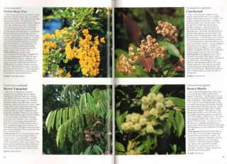 Australian rainforest plants [volume two]: in the forest and in the garden.
