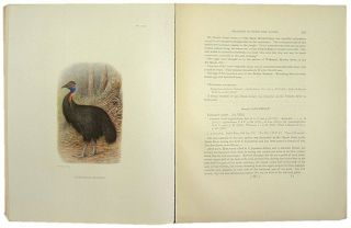 Reports on the collections made by the British Ornithologists' Union Expedition and the Wollaston Expedition in Dutch New Guinea 1910-1913.