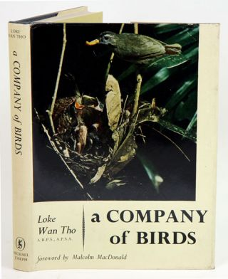 A company of birds. Wan Tho Loke.