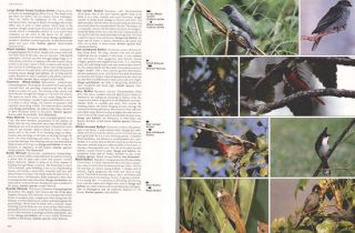 The Hamlyn photographic guide to birds of the world.