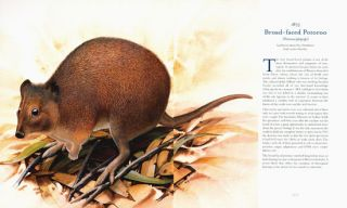 A gap in nature: discovering the world's extinct animals.