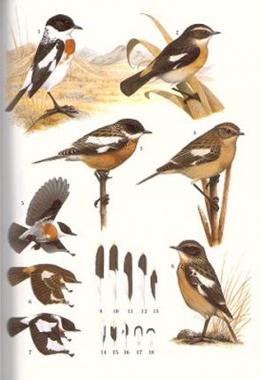 Stonechats: a guide to the genus Saxicola.