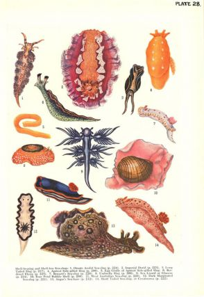 Australian shells: with related animals living in the sea, in freshwater and on the land.