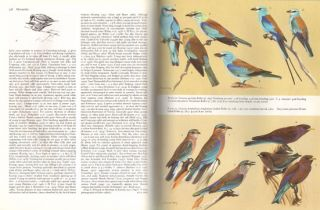 Handbook of the birds of Europe, the Middle East and North Africa. The birds of the Western Palearctic [BWP], volume four: Terns to woodpeckers.