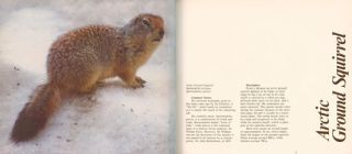 The squirrels of Canada.