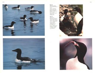 The Thick-billed Murres of Prince Leopold Island: a study of the breeding ecology of a colonial high arctic seabird.