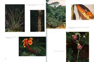 Plants of the world.
