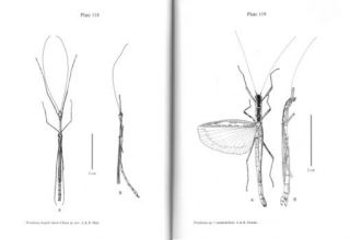 An illustrated guide to the stick and leaf insects of Peninsular Malaysia and Singapore.