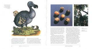 Dodo: from extinction to icon.