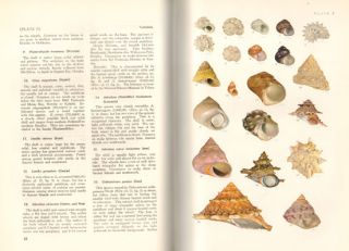 Shells of the western Pacific in colour.