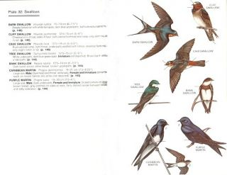 A guide to the birds of Puerto Rico and the Virgin Islands.