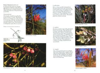 Wildflowers and plants of inland Australia.