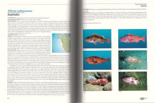 The rockfishes of the Northeast Pacific.