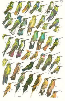 A guide to the birds of Colombia.